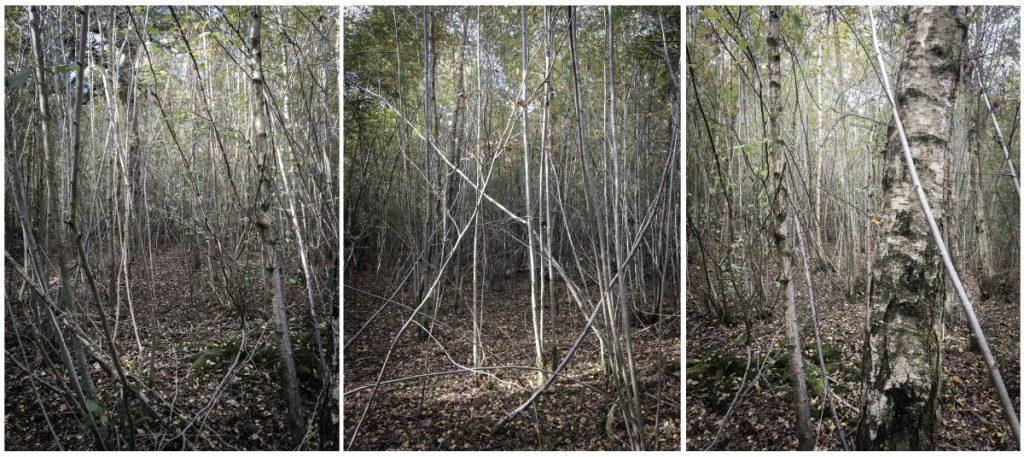 trees-triptych-2