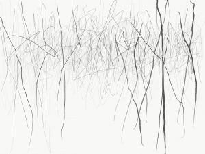 Latest Tree Drawings